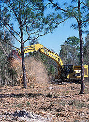 A set of steel blades mounted onto an excavator grinds trees into mulch: Click here for full photo caption.
