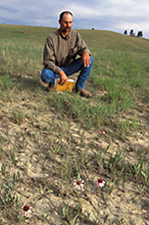 Photo: Extension agent Kirk Denny assesses rangeland health as determined by spread of Echinacea plants from a seed source island. Link to photo information