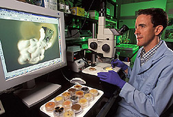 Photo: ARS entomologist Fernando E. Vega examines a fungal and bacterial endophyte isolated from a coffee bean. Link to photo information