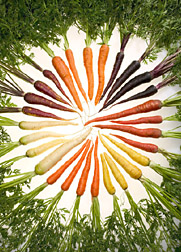 Carrots of different colors arranged in a circle.