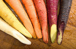 Cross-sections of highly pigmented carrots: Click here for photo caption.