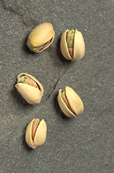 Photo: Five pistachios in the shell. Link to photo information