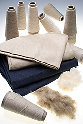 Samples of raw flax and raw cotton and yarns, woven denim, and knitted fabrics made with various blends of cotton and flax: Click here for full photo caption.