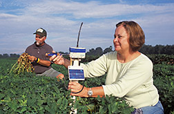 Technicians monitor telemetry equipment used in a peanut crop: Click here for full photo caption.