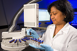 Using gas chromatography/mass spectrometry, chemist Agnes Rimando analyzes pterostilbene content in blueberries. Link to photo information