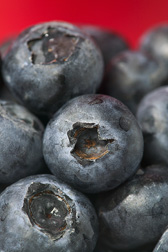 Blueberries: Click here for full photo caption.