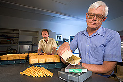 Blair Goates and Harold Bockelman weigh and package small seed samples. Link to photo information