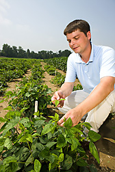 David Hyten harvests leaf tissue. Link to photo information
