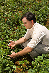 Tim Porch examines bean pods. Link to photo information