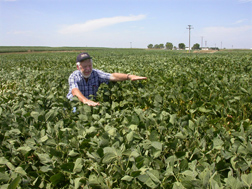 In a Nebraska field, a Team Drought collaborator screens soybean plants for desirable slow-wilting traits: Click here for full photo caption.