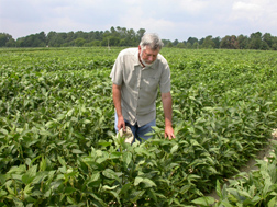 At the Sandhills Research Station in North Carolina, a geneticist is developing soybean breeding lines that have improved tolerance to reduced moisture and flourish over a variety of geographic regions: Click here for full photo caption.