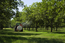 Compost tea is sprayed on the organic trees once every 6 weeks throughout the growing season: Click here for full photo caption.