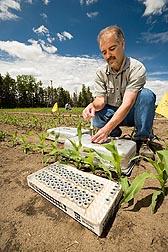 Photo: ARS soil scientist Rodney Venterea collects greenhouse gas samples from a corn field. Link to photo information
