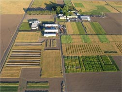 Aerial view of GRACEnet test plots at the Columbia Plateau Conservation Research Center in Pendleton, Oregon: Click here for photo caption.