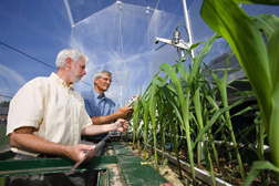 Soil scientist (left) and plant physiologist measure chlorophyll concentrations in corn leaves exposed to elevated carbon dioxide: Click here for full photo caption.