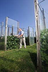 Plant physiologist measures carbon dioxide (CO2) uptake and water loss from leaves of soybeans grown at elevated CO2 concentrations: Click here for full photo caption.