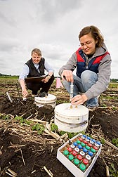 Using closed vented chambers, biological science aide (right) and soil scientist collect gas emissions from soil: Click here for full photo caption.