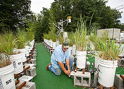 In simulated rain garden trials, a technician collects leachate to identify plants best able to slow movement of water, nutrients, and fecal bacteria through soil: Click here for full photo caption.