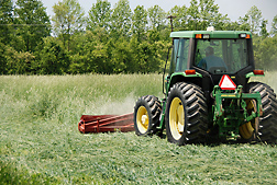 A front-mounted roller-crimper rolling over a cover crop: Click here for photo caption.