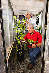 Biologist (front) and plant physiologist record the number and location of sprouting buds on citrus trees exposed to different environmental conditions in a growth chamber: Click here for full photo caption.