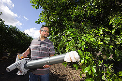ARS biological science aide vacuums a citrus tree to collect samples of Asian citrus psyllids for population monitoring studies: Click here for full photo caption.