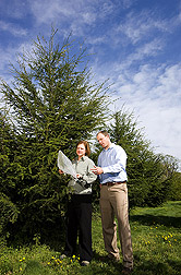Horticulturist and geneticist examine bagged branches of hybrid hemlocks inoculated with hemlock woolly adelgid: Click here for full photo caption.