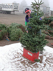 Photo: Washington State University plant pathologist Gary Chastagner with a Christmas tree.  