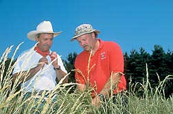 Photo: Wisconsin farmer/grass breeder Peter Pitts (left) and ARS geneticist Michael Casler inspect festulolium ryegrass in a field. Link to photo information
