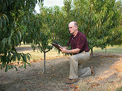 Plant pathologist Andy Nyczepir studies tree height data in a peach tree establishment plot: Click here for photo caption.