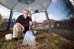 At Gainesville, Florida, entomologist Chris Geden sets up an autodissemination device for flies in an outdoor screenhouse: Click here for full photo caption.