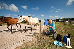 Entomologist Jerry Hogsette sets out stable fly traps and targets for a field study: Click here for full photo caption.