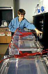 Technician Barbara Brandon runs DNA tests. Click here for full photo caption.