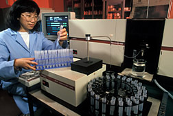 A graduate student analyzes samples extracted from hyperaccumulator plants. Click here for full photo caption.