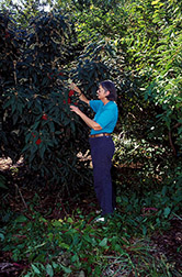 Horticulturist Ruth Dix displays a berry-laden Cree viburnum. Click here for full photo caption.