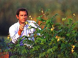 Brad Morris inspects coffee senna.