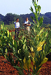 Agronomist Morris (left) and technician Weatherly conduct field observations