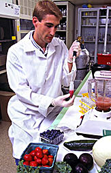 Research technician John McEwen prepares fruits and vegetables for the chromatographic separation of antioxidant components.