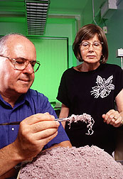 Chemists William Marmer and Maryann Taylor
