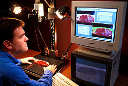 To predict beef carcass composition, food technologist Steven Shackelford makes computerized images of steak samples.