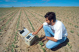 A graduate student monitors soil water content with a time- domain reflectometry probe. Click here for full photo caption.