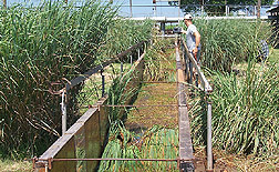 Grass hedges in a flume: Click here for full photo caption.
