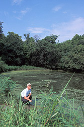 Scientist views algae bloom in a bayou. Link to photo information