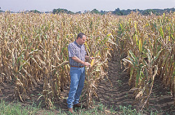 Soil scientist evaluates a potential corn harvest: Click here for full photo caption.