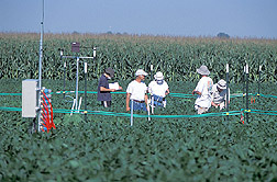 Scientists measure effects of elevated ozone on soybean: Click here for full photo caption.