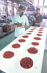 Food scientist and geneticist study berry quality: Click here for full photo caption.
