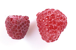 A plump bright berry and a smaller, darker berry: Click here for full photo caption.
