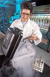 Chemist prepares amphibian tissue samples: Click here for full photo caption.