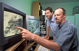 Entomologist and ecologist examine images of grasshopper gut material: Click here for full photo caption.