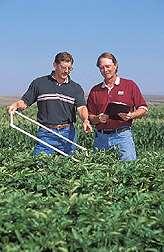 Agronomist and microbiologist record weed density in potatoes: Click here for full photo caption.