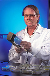 Hal Collins examines samples of soil bacteria in lab dishes. Link to photo information